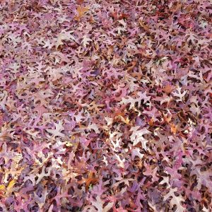 20181022_153025 herfstbladen 1